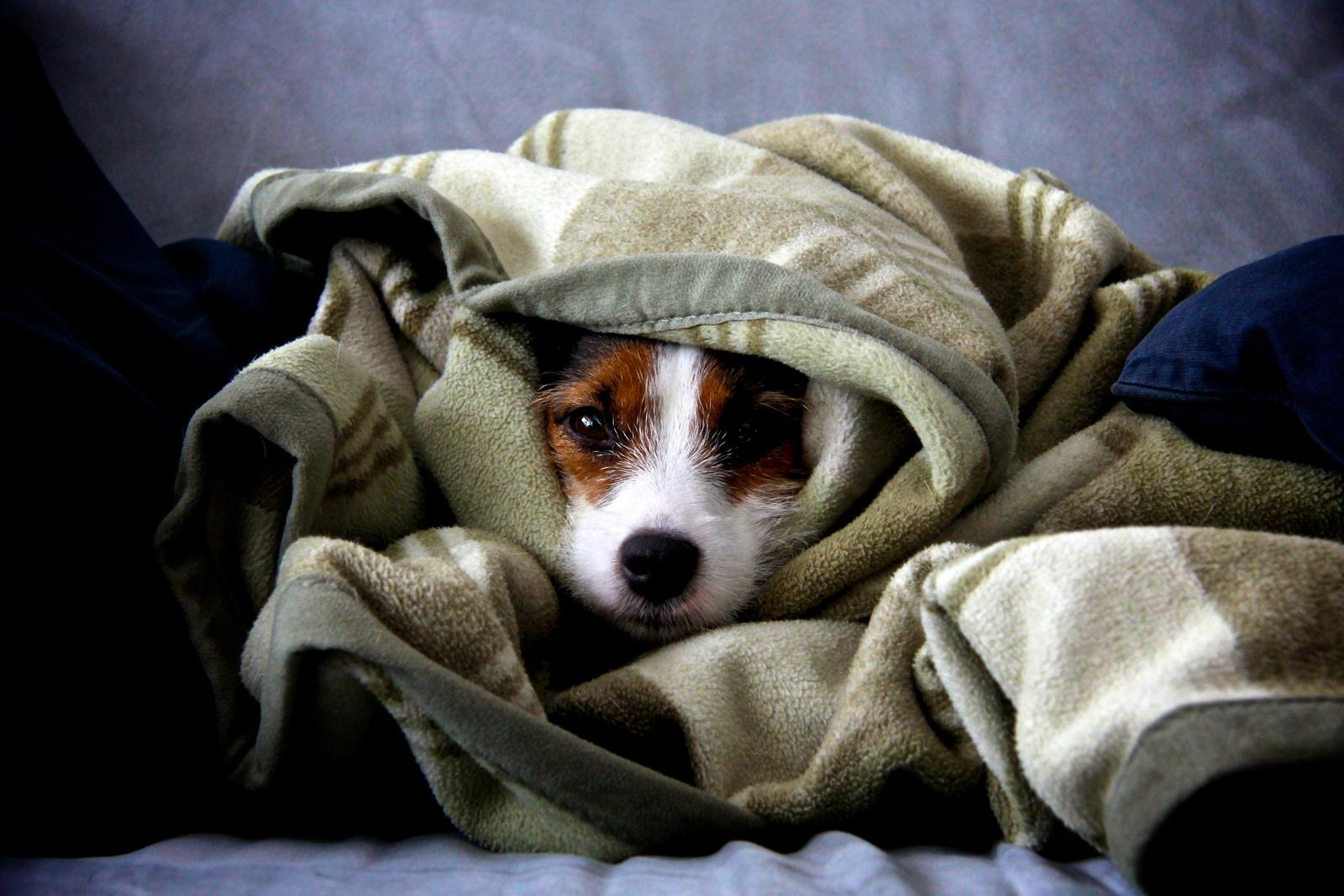 Confort thermique : les bonnes astuces
