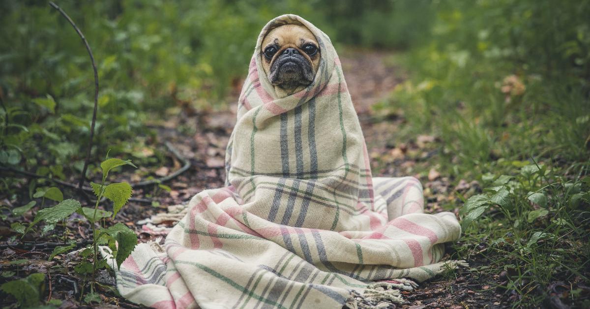 Bilan thermique, l'étape indispensable pour le choix de votre chauffage.
