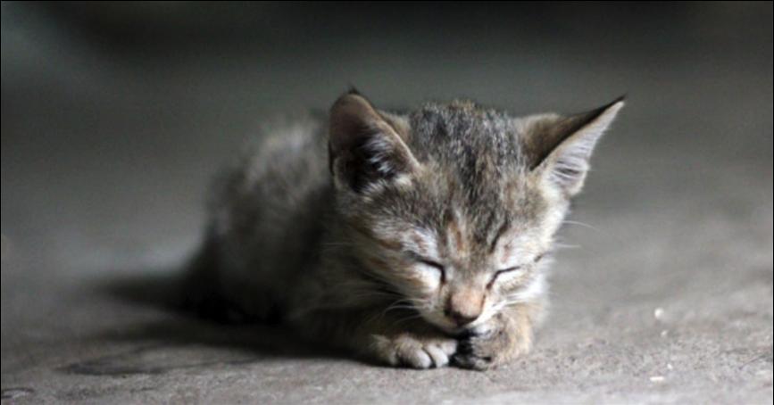 Le plancher chauffant : 8 raisons de l'adopter
